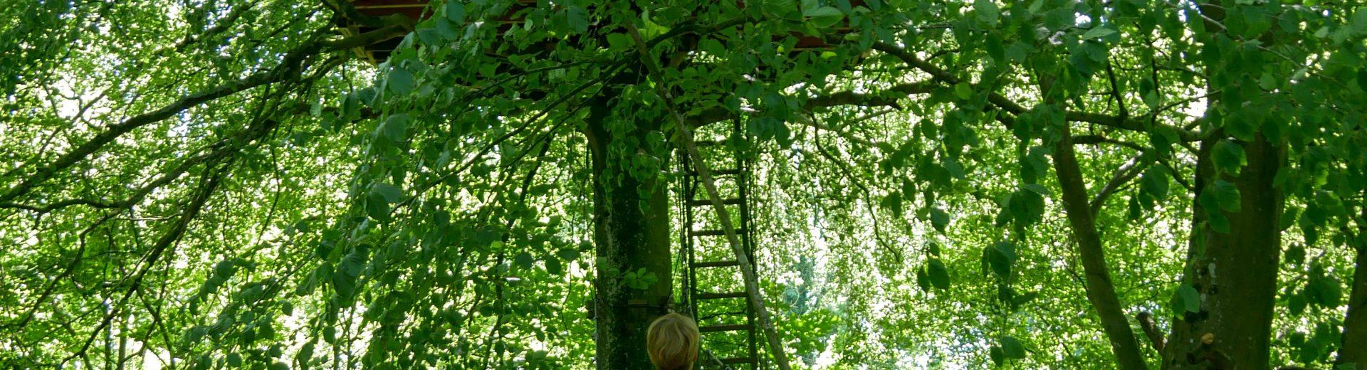 Domaine-de-Wail-Cabane-dans-les-arbres-4-©A.Chaput-Pas-de-Calais-Tourisme